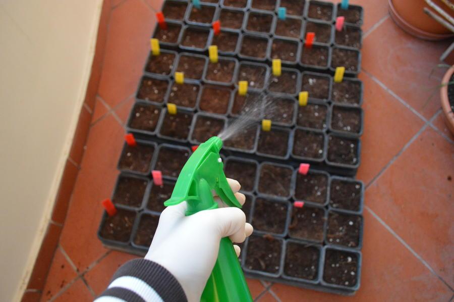 Φτιάχνω εύκολα σπορείο για λαχανικά ή λουλούδια